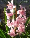 jarne kvety