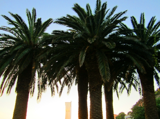 palmy pred hotelom